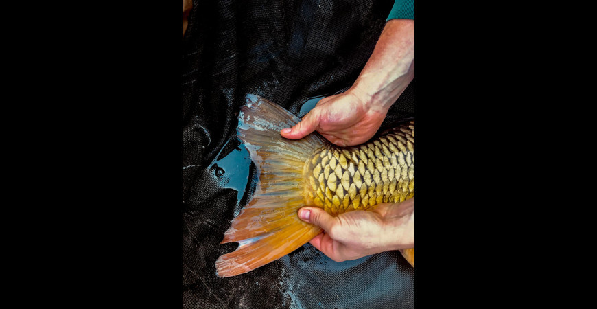 Ekobaits Reports - łowisko Pogalewo